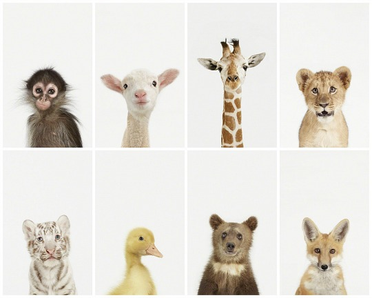 Láminas de animales de Sharon Montrose